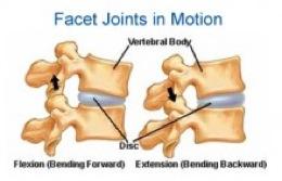 Spinal Motion Segment